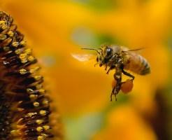 蜂 対処法 症状 刺される 種類