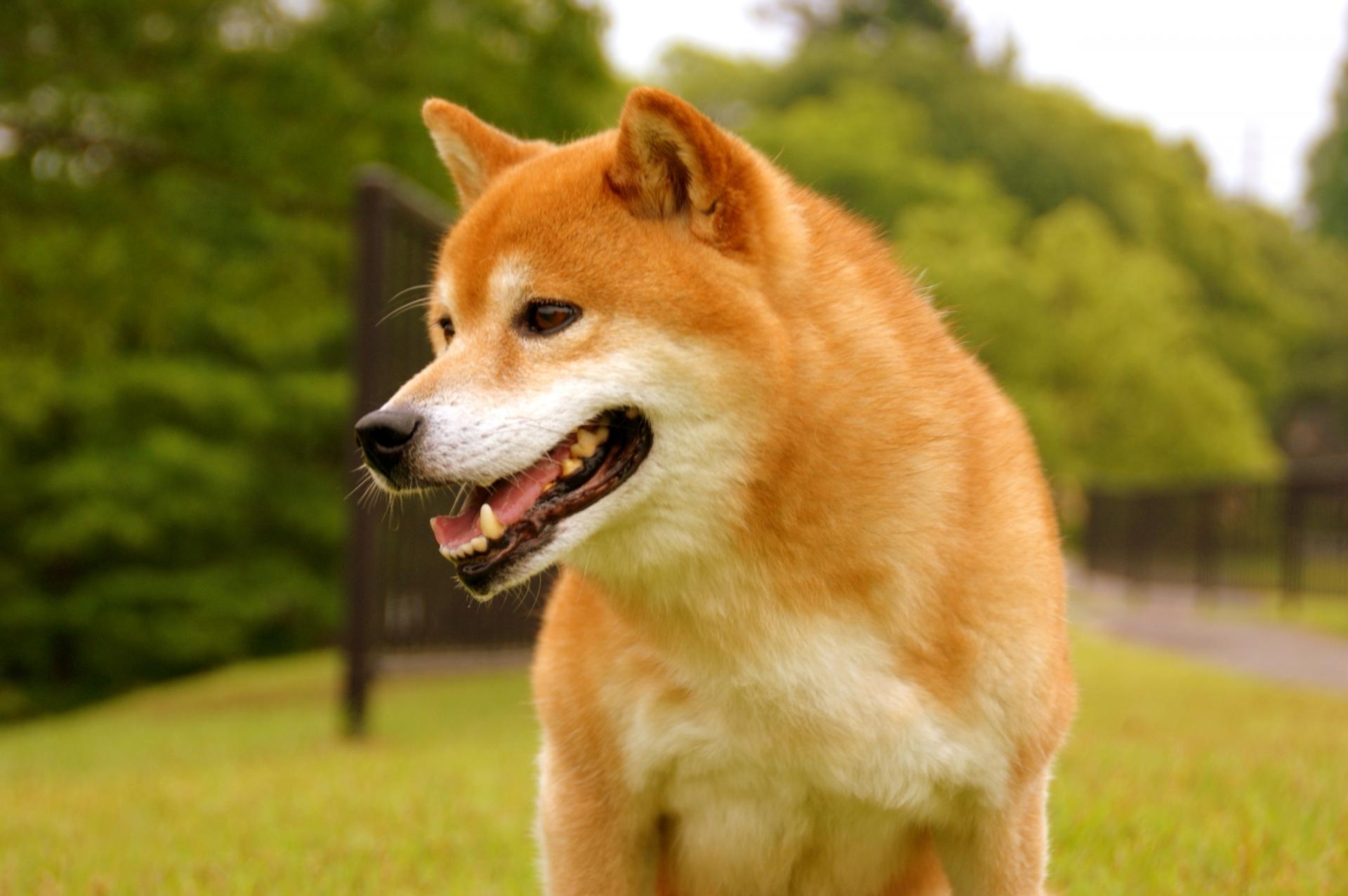 台風 外 犬