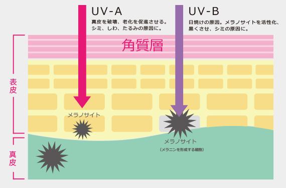 紫外線(UV-A,UV-B)が肌に影響を与える仕組み