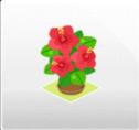 鉢植え/ハイビスカス