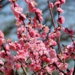 立春に食べる食べ物知ってる?縁起良くて旬なものを食べよう!