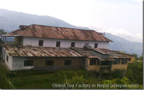 oldest_tea_factory_in_Nepal