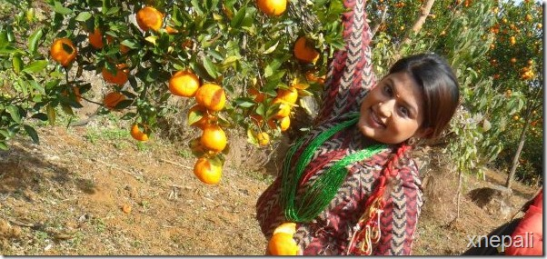 shilpa pokharel picks oranges
