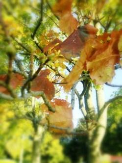 Crumbling Leaves