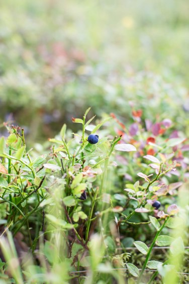 berries1 (1 of 1)
