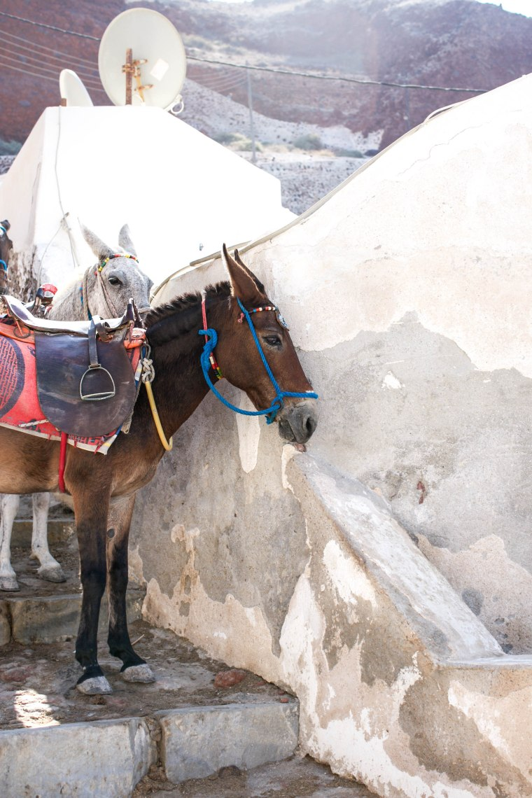 donkeys oia stairs (1 of 1)