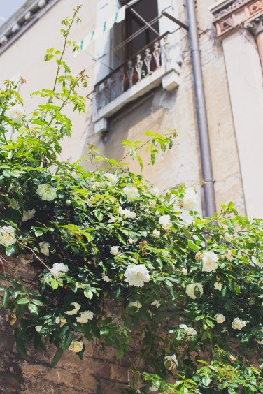 sunbaked roses venice2 (1 of 1)