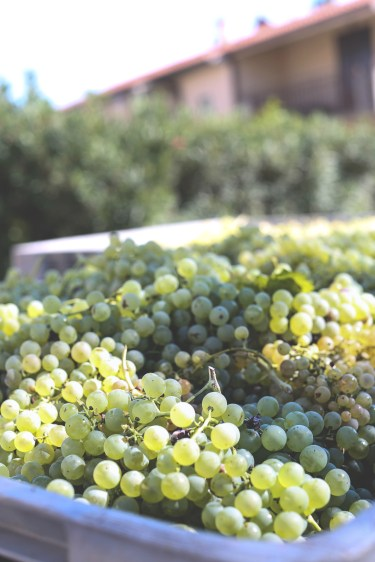 wine tasting4 (1 of 1) kopio
