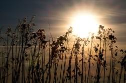 Pflanzen, Sonne, Himmel (Schliffkopf)