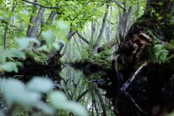 Stenshuvud Nationalpark - auf Teilen des Rundweges wähnt man sich nicht mehr an der Ostsee