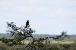 Store-Mosse Nationalpark - worauf der wohl wartet