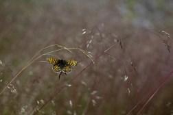 Store-Mosse Nationalpark - Schmetterlinge jeglicher Couleur überall