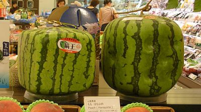 Cubic Japanese Watermelon