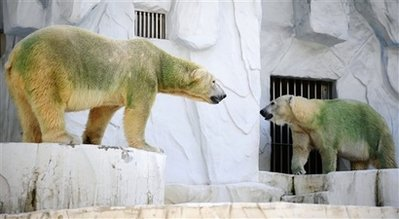 Green polar bears in Japan