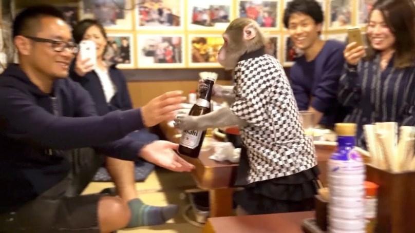 Japanese restaurant has monkey waiters