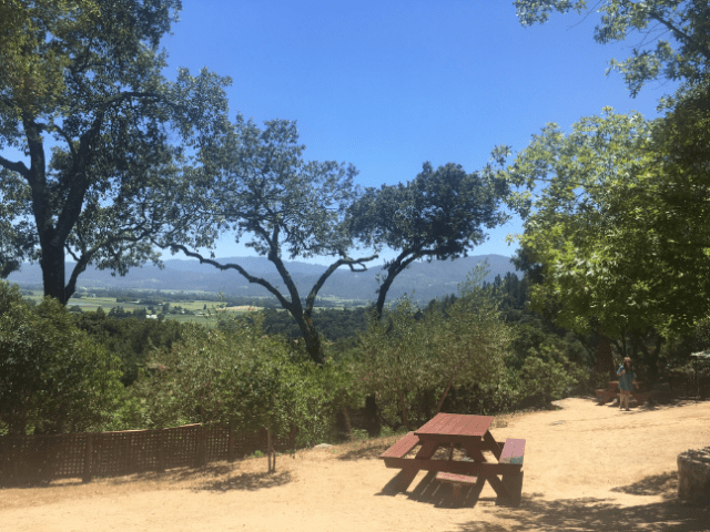 Napa in the Summer travel life-style