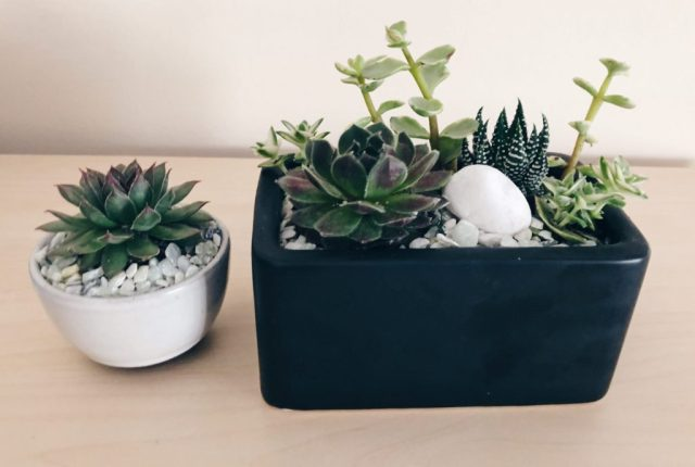 How to Create Your Own Mini Succulent Garden diy