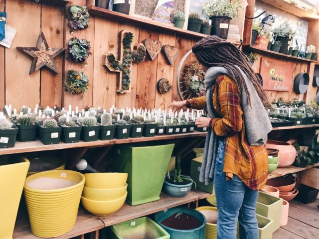 Picking Succulents life-style