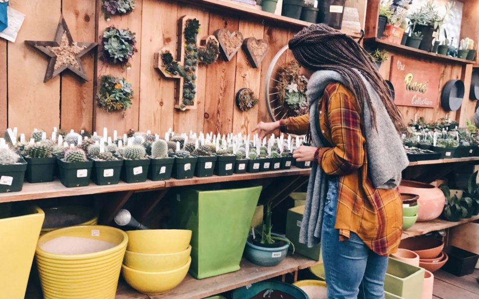 Picking Succulents