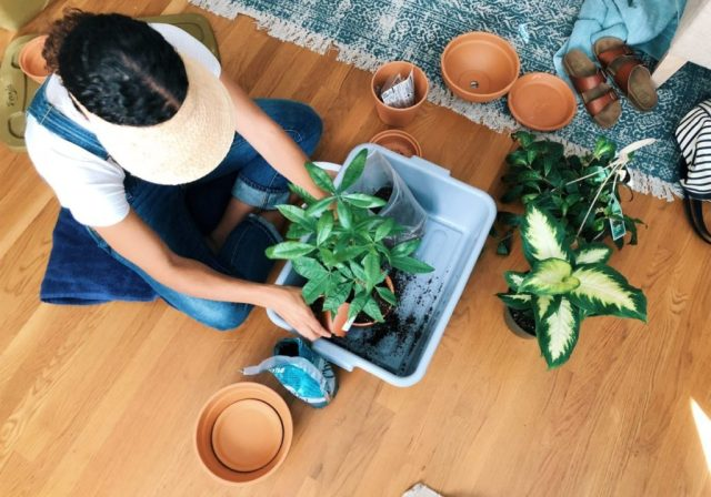 Adding New Plant Babies to the Home life-style diy