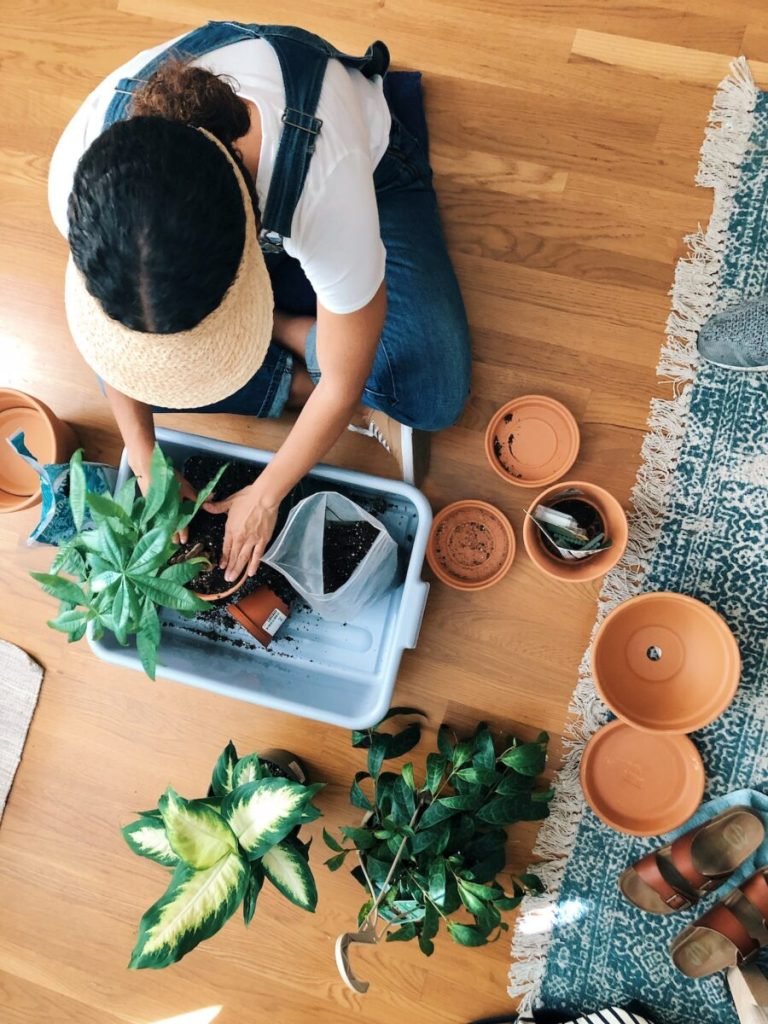 Repotting Our Plant Babies - Tips for successful transfer plants life-style