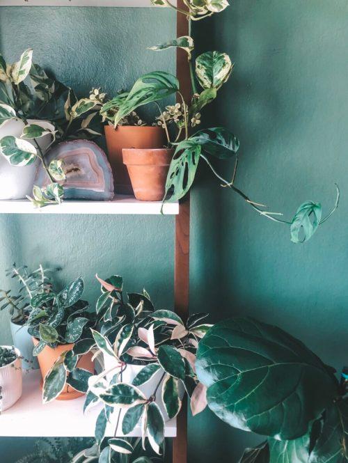 xoxojackie plants
