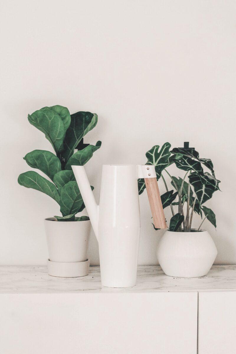 winter-plant-care
