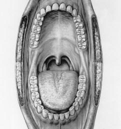 mouth illustration otis archives [ 1599 x 2540 Pixel ]