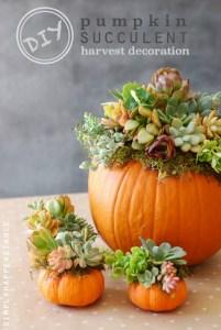 DIY-Pumpkin-Succulent-Harvest-Decoration-simplyhappenstance.com_