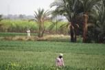 Luxor fields