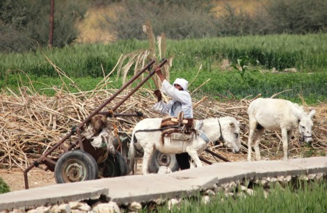 Luxor man and donkey cart