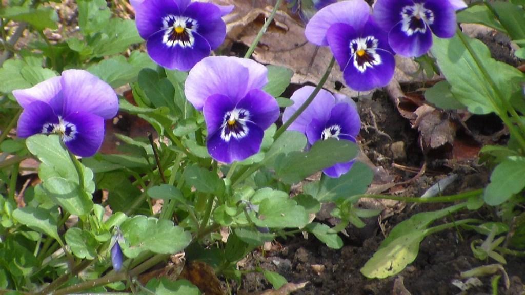 20140510XD-Flowers2 029
