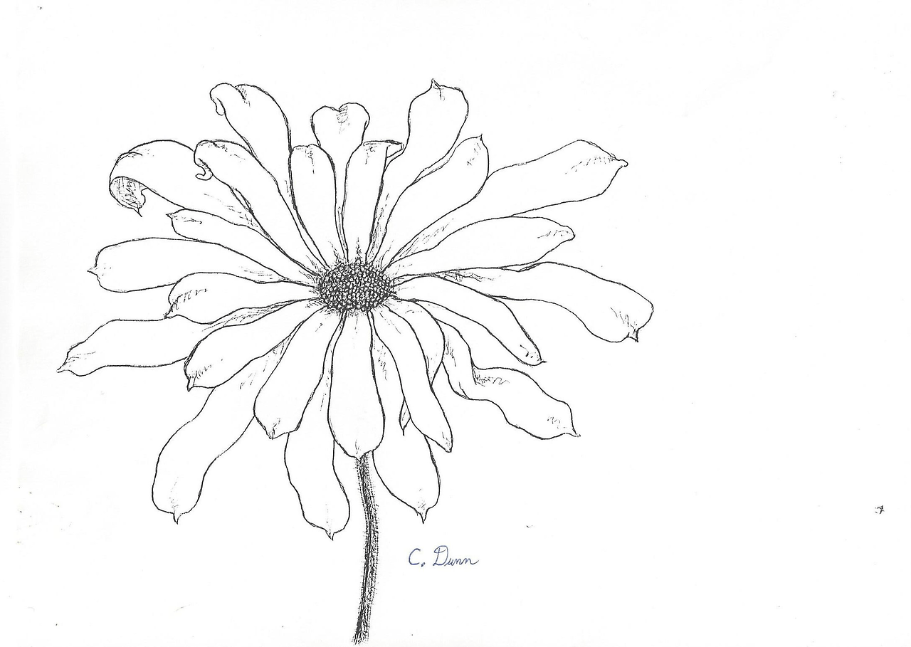 eleletsitz: Transparent Flower Drawing Tumblr Images