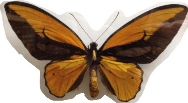 motyle-3