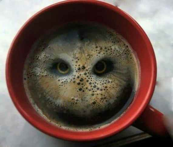 coffee-owl