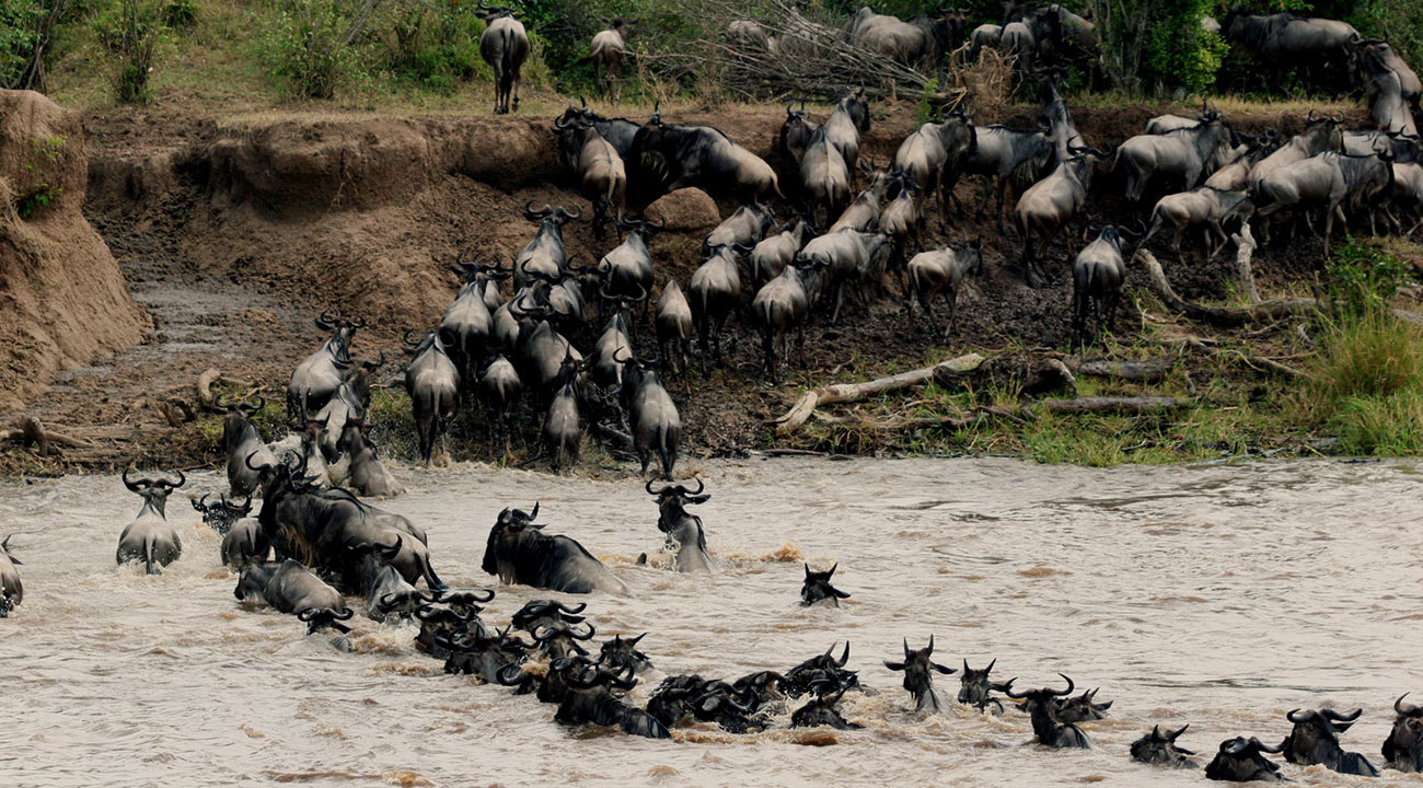 The Beauty of Wildebeest Migration Safari on a Hot Air Balloon