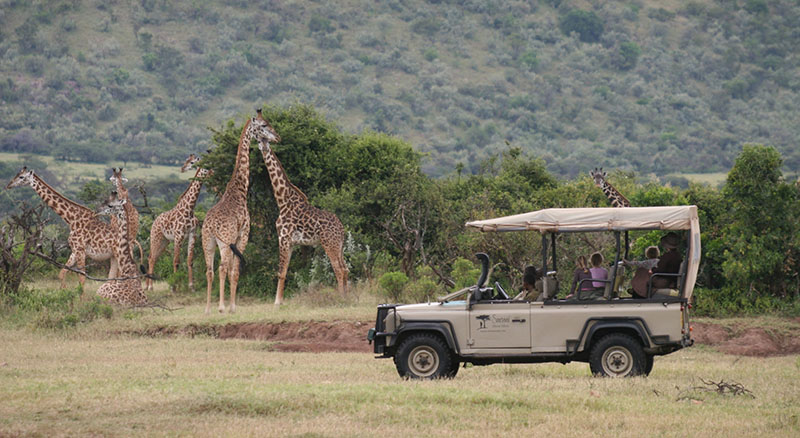 African Giraffes In The Wild