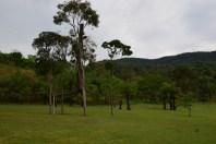 Obra Árvore Suspensa