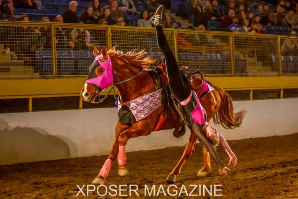 Rocky Mountain Horse Expo's Mane Event