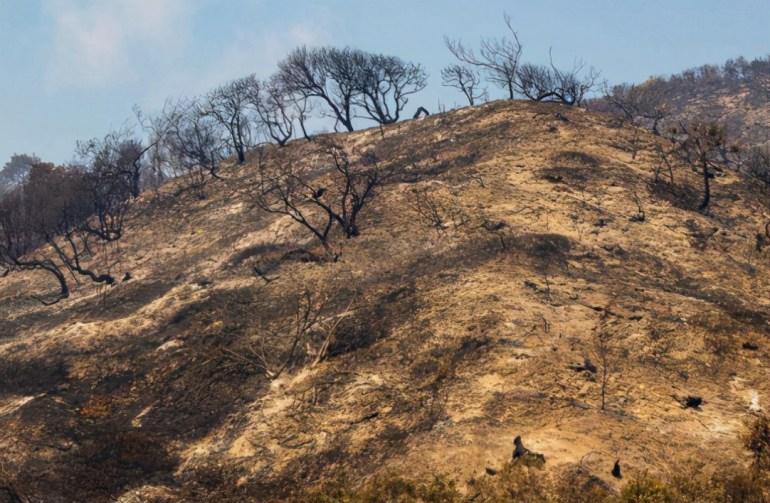 制造事端、碰瓷挑衅,是谁放任印度,使其成了国际巨婴?