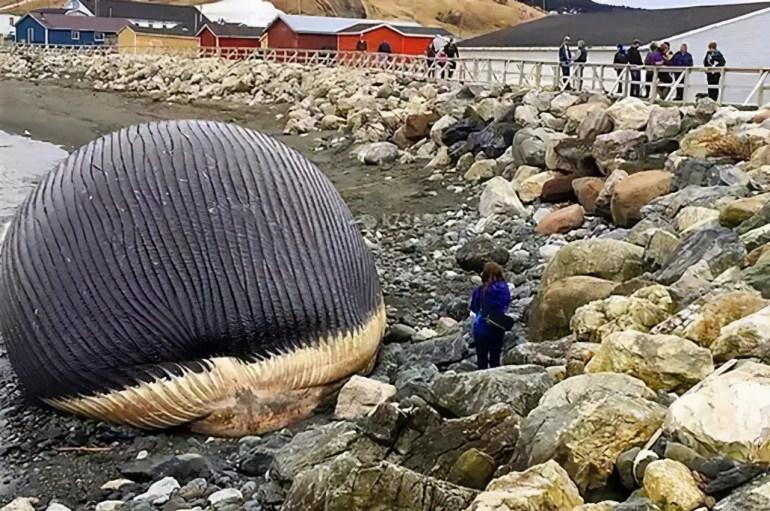 这场运动拯救了中国,改变了世界