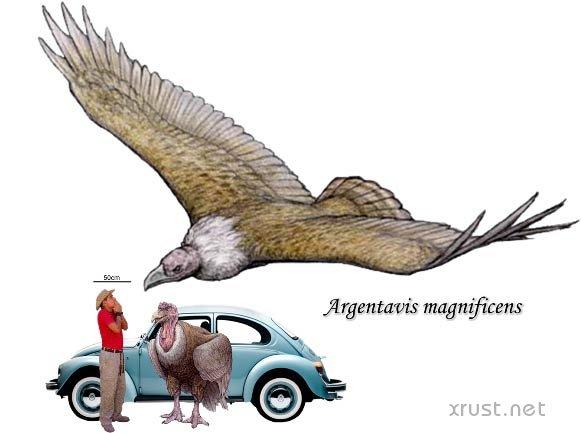 Какая самая большая птица?