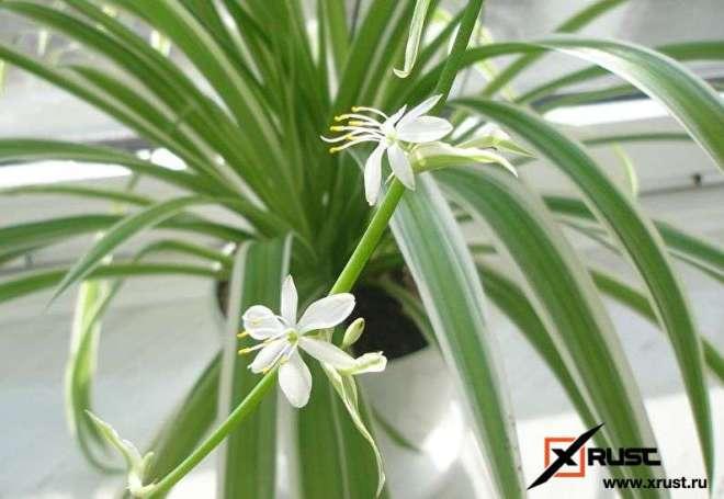 Растения для очистки воздуха в квартире