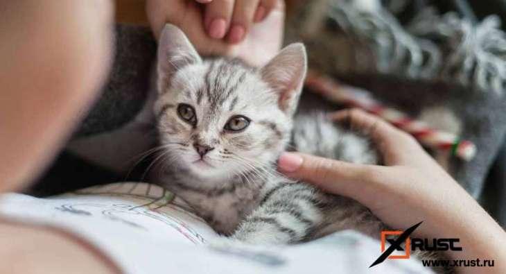 Как кошка излечит от стресса