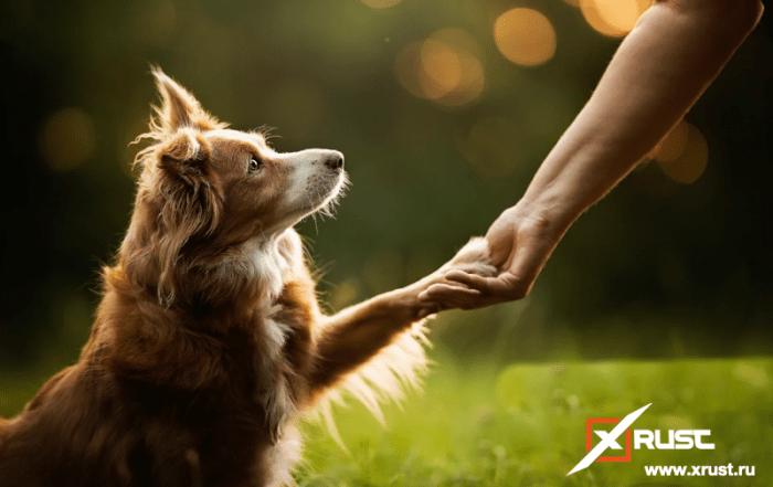 Собаки воспринимают речь как люди