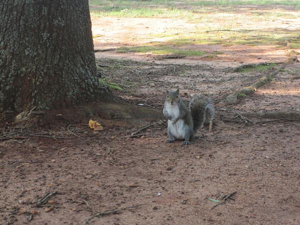 Squirrels make me nervous - Blue
