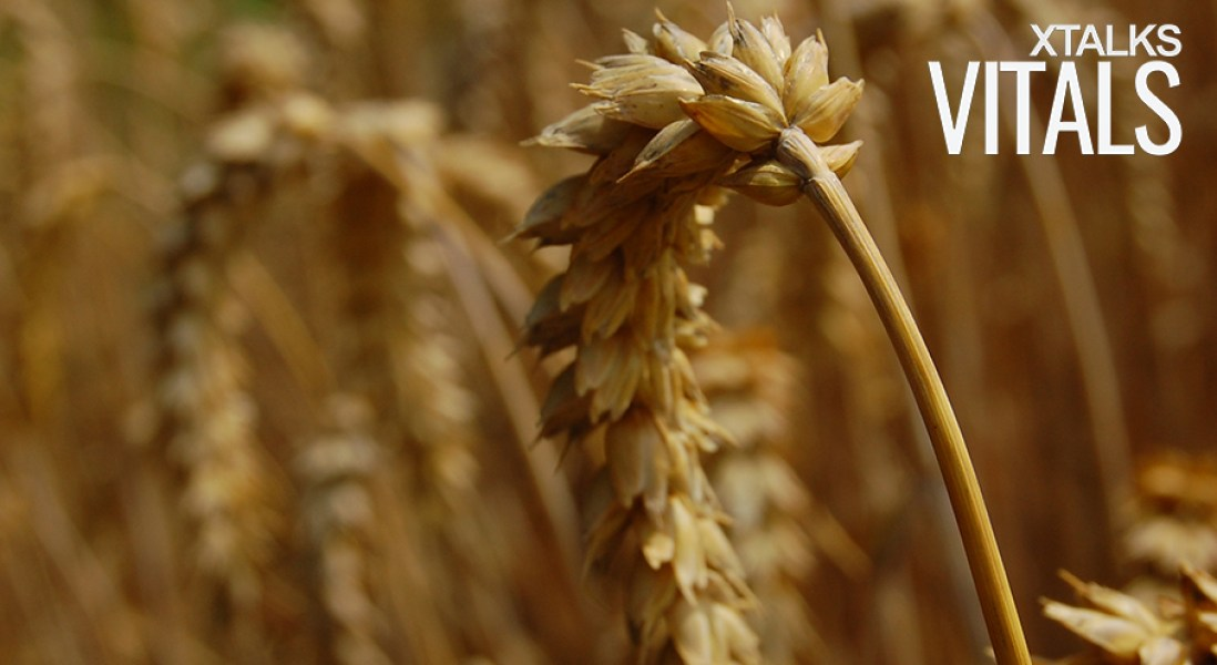 Bayer Seeks To Buy Monsanto in $66 Billion Deal