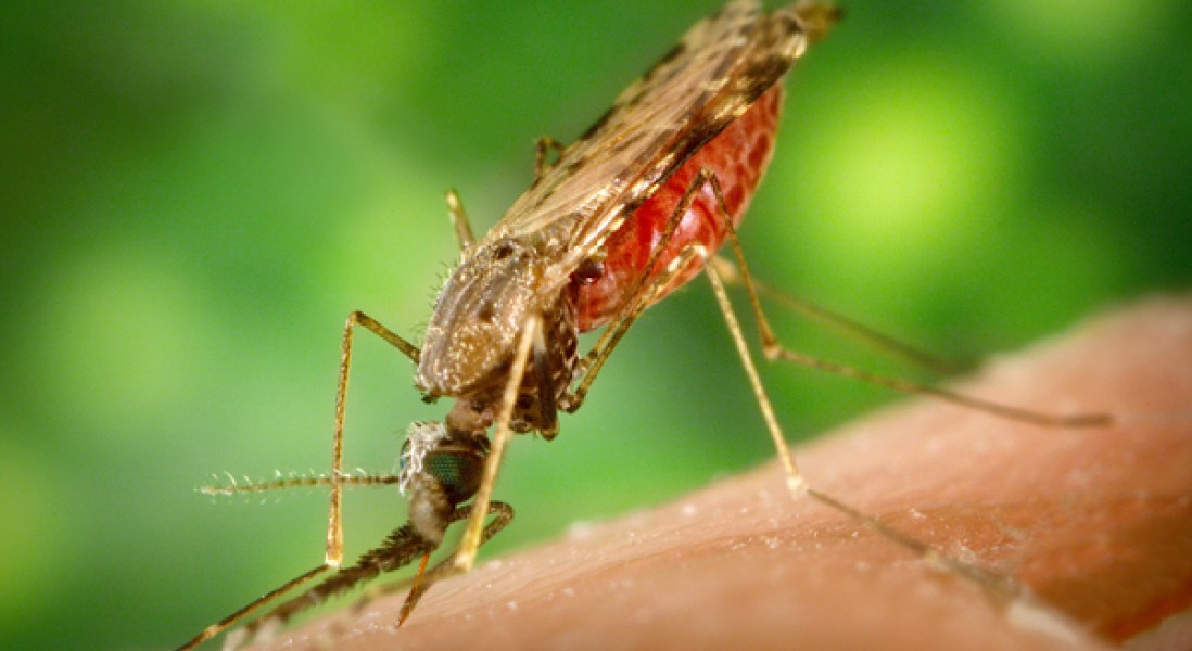 Sanofi Gets Approval For World's First Dengue Vaccine