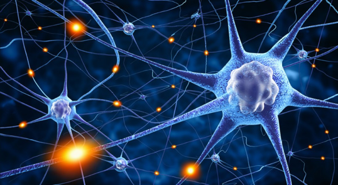 Neuroprotective Protein Identified in Activated Neurons