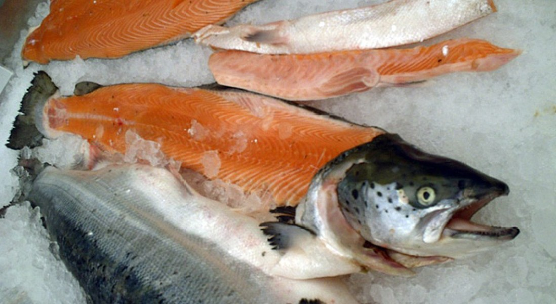 Genetically Modified Salmon Approved By FDA For Consumption In US
